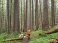 High Divide Loop, Olympic Peninsula, Washington