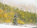 Autumn in the Wasatch Range, Utah