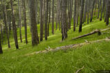 Kotor Forest print