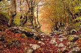 Durmitor Forest print