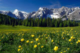 Misurina Wildflowers print