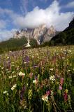 Catinaccio Wildflowers print