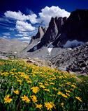 Warbonnet Wildflowers print