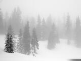 Misty Trees print