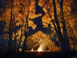 Cottonwood Bonfire print