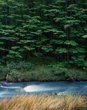 Lenga Forest print
