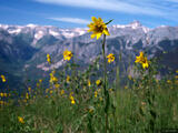 Wildflower With a View print