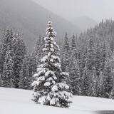 Snowy Tree print