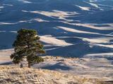 Dunes Tree print