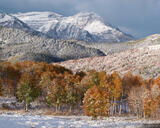 Timp Autumn Snow print