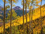 Red Mountain, Yellow Aspens print