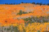 Orange Forest print