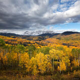 Fall Creek Aspens print