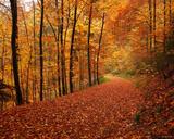Freiburg Autumn Road print