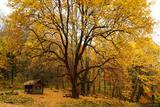Freiburg Yellow Tree print