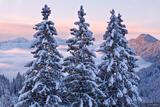Three Snowy Trees print