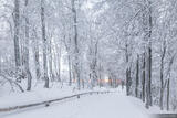 Schauinsland Winter Path print