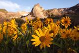 Sundial Flowers print