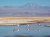 Laguna Chaxa Flamingos print