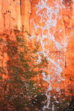 Deer Spring Waterfall Moment print