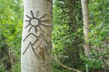 Aspenglyph print