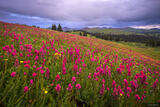 Wildflower Wonderland