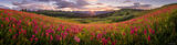 Paintbrush Sunrise Panorama print