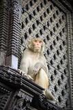 Monkey Temple print