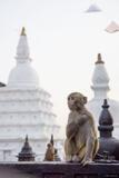 Swayambhunath Monkey Stupas print
