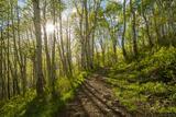 Kebler Aspen Trail print