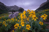 Lamoille Canyon Flowers print