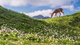 Deer and Lilies print