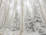 Snow Smothered print