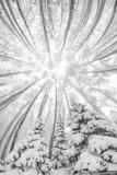 Snowy Aspen Vortex B&W print