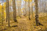 Yellow Leaf Road print