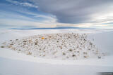 White Sands Camp print