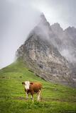 Hohljoch Cow print