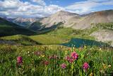 Huron Peak Wildflowers print