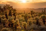 Cholla Sunset print