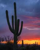 Saguaro Sunset 2 print