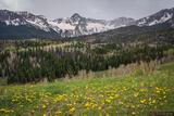Mears Peak Dandelions print