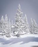 Snow Caked print