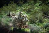 Cactus Greens print