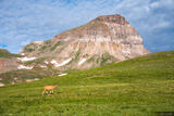 Deer and Uncompahgre Peak print