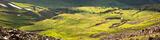 Elk Herd Panorama print