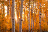Aspen Sunset Light print