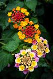 Deia Flowers print