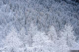 Frosted Forest print