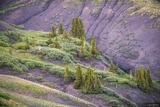 Purple Hills print