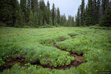 Rainy Meadow Stream print